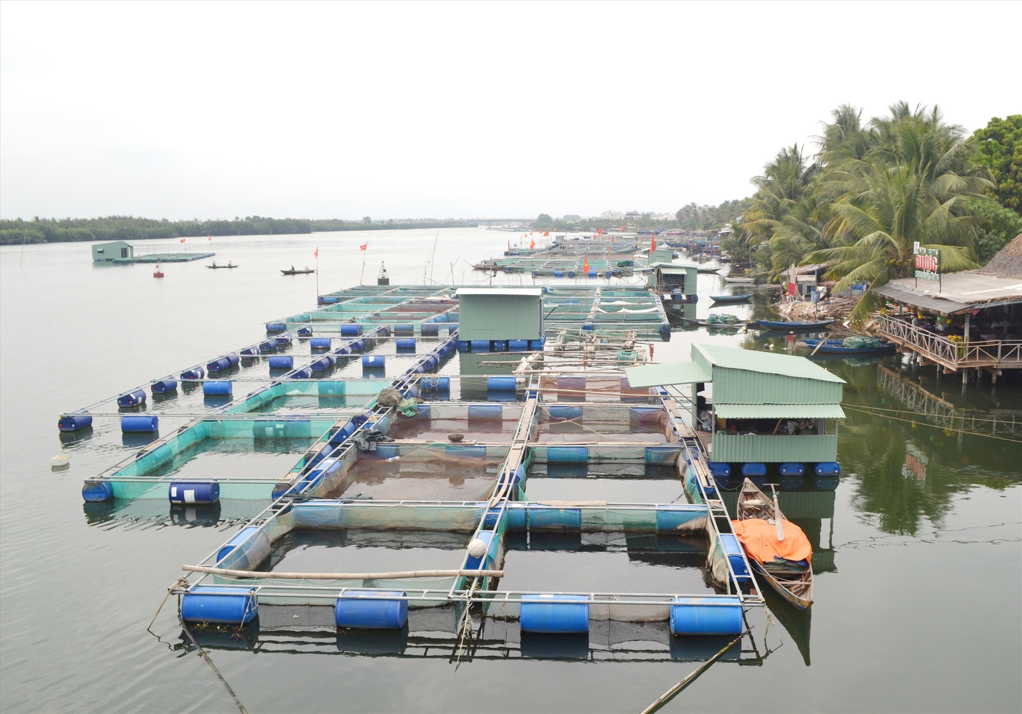 Không kê khai nuôi thủy sản nên nông hộ nuôi cá trong lồng bè trên địa bàn tỉnh không được hỗ trợ khi cá chết do thiên tai hoặc dịch bệnh. Ảnh: VIỆT NGUYỄN