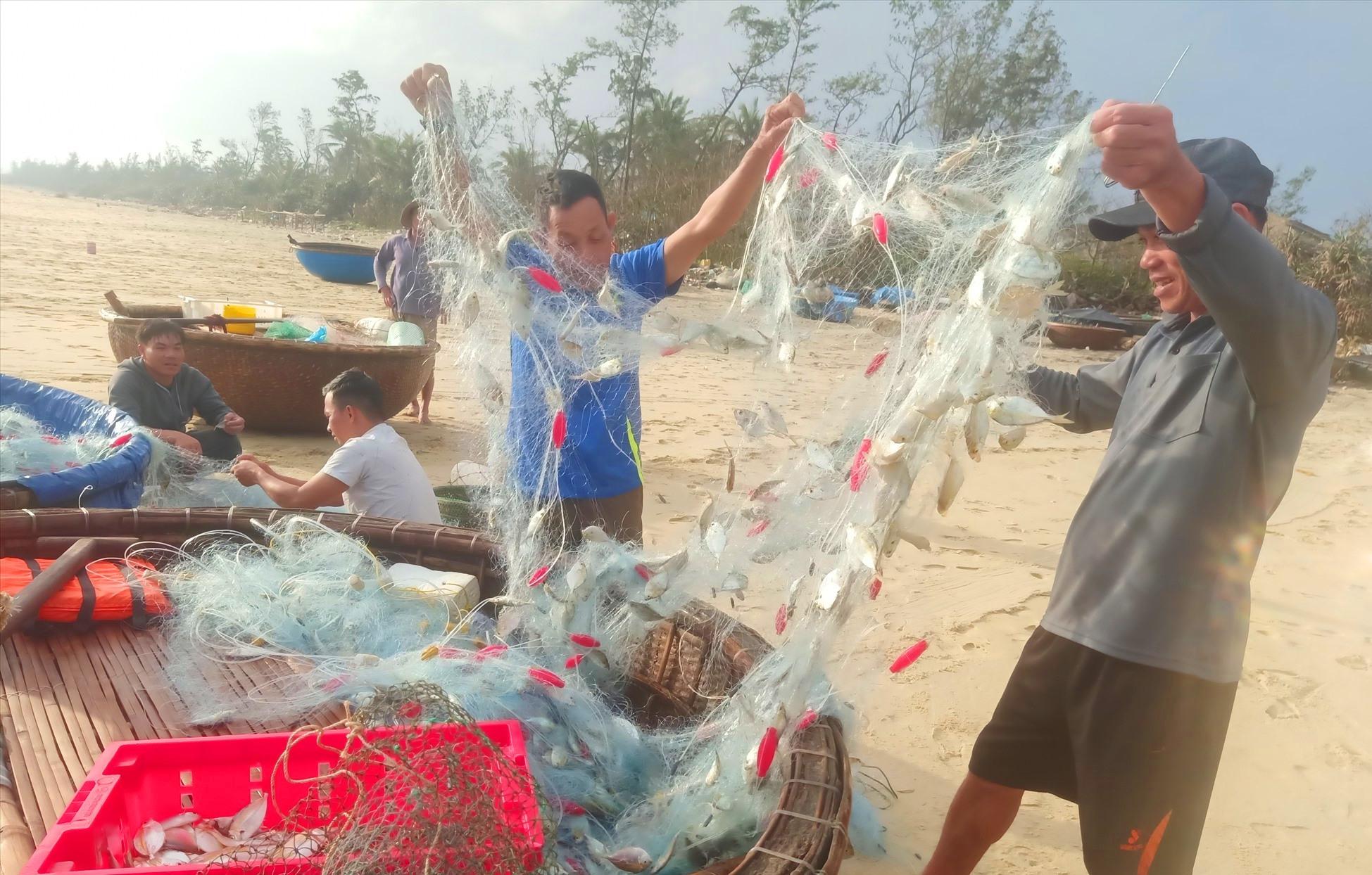 Những mẻ lưới nặng trĩu cá liệt chỉ vàng, cá khế, cá nục chỉ vàng của ngư dân Tam Tiến sau vài giờ chài lưới. Ảnh: HOÀNG LIÊN