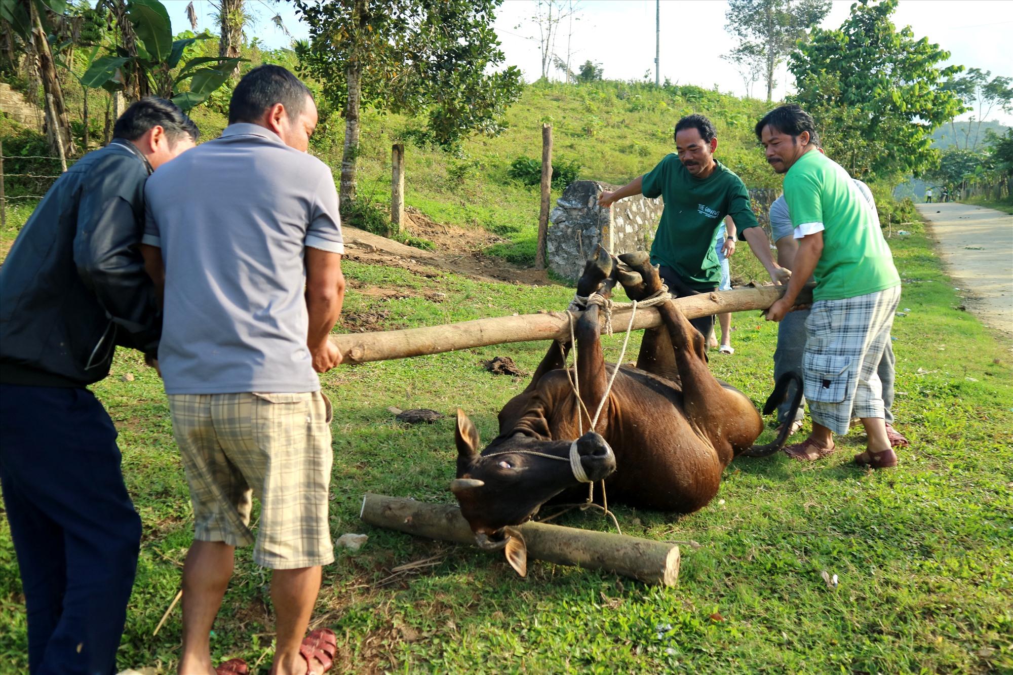 Dù điều kiện còn nhiều khó khăn, nhưng tết, đồng bào góp chung kinh phí để mổ bò, dự trữ ẩm thực truyền thống để đón khách. Ảnh: Đ.N