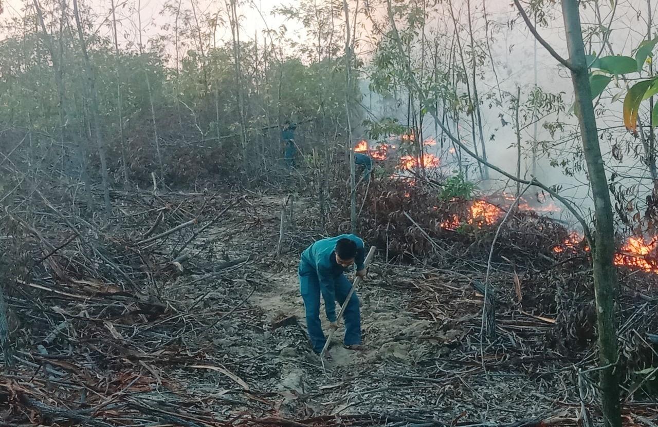 Cháy rừng trồng tại xã Bình Minh (Thăng Bình) vào cuối tháng 2.2021. Ảnh: HOÀI AN