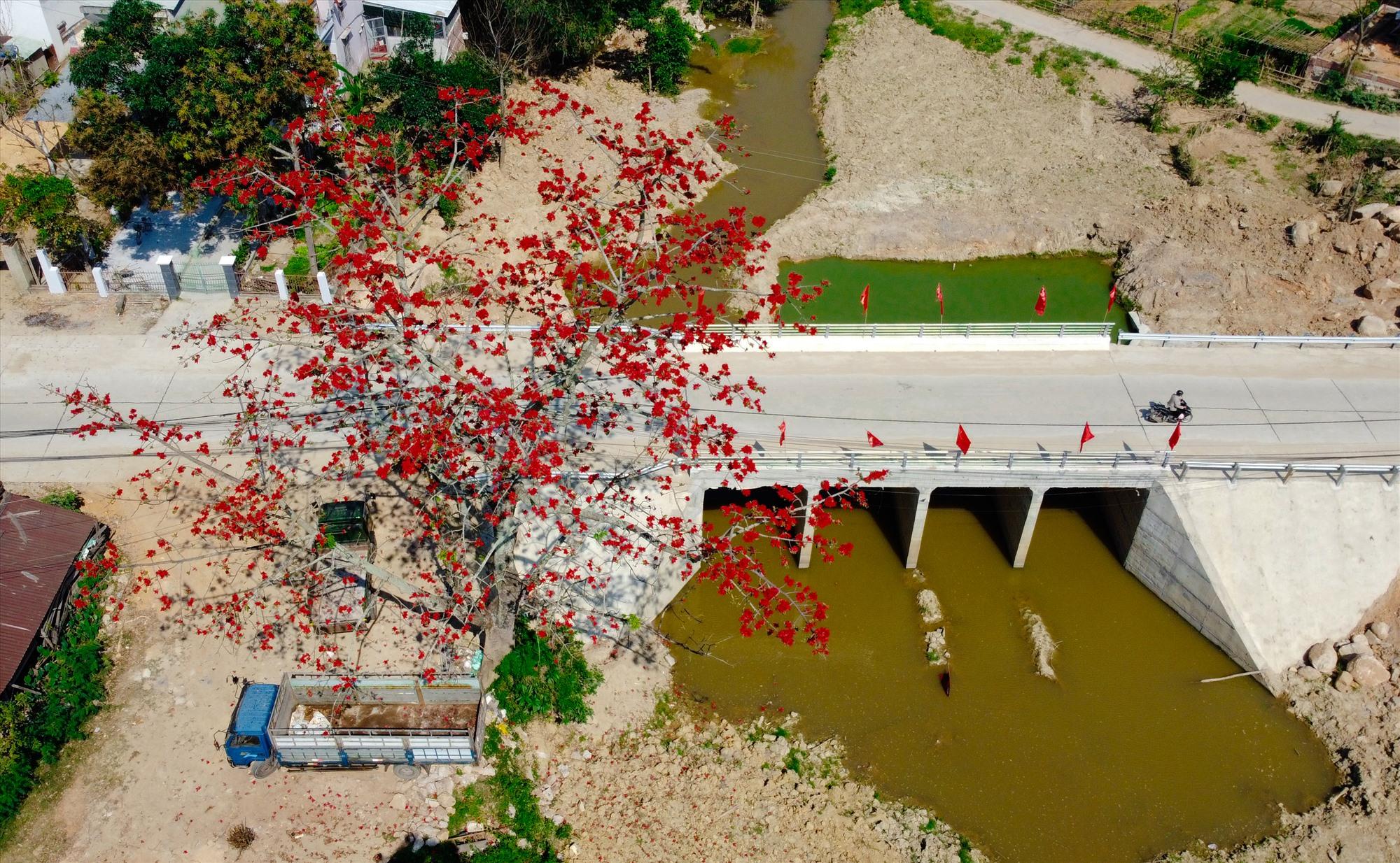 Sắc đỏ hoa gạo ở mỗi ngôi làng như níu giữ ký ức của bao người con quê xứ. Ảnh: T.C