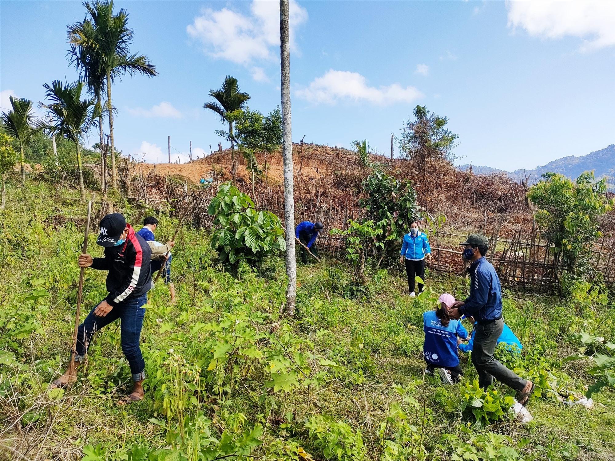 Tuổi trẻ Nam Trà My triển khai nhân rộng mô hình rừng cây cộng đồng tại xã Trà Vân. Ảnh: V.K