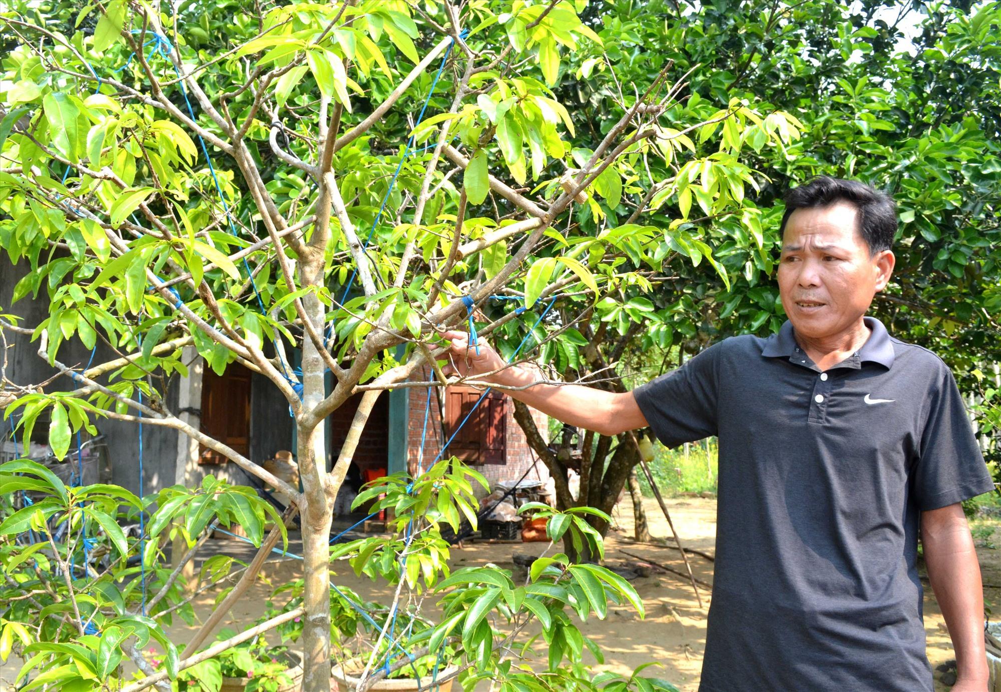 Trồng, chăm sóc cây cảnh giúp gia đình ông Thanh có nguồn thu nhập ổn định. Ảnh: VIỆT NGUYỄN