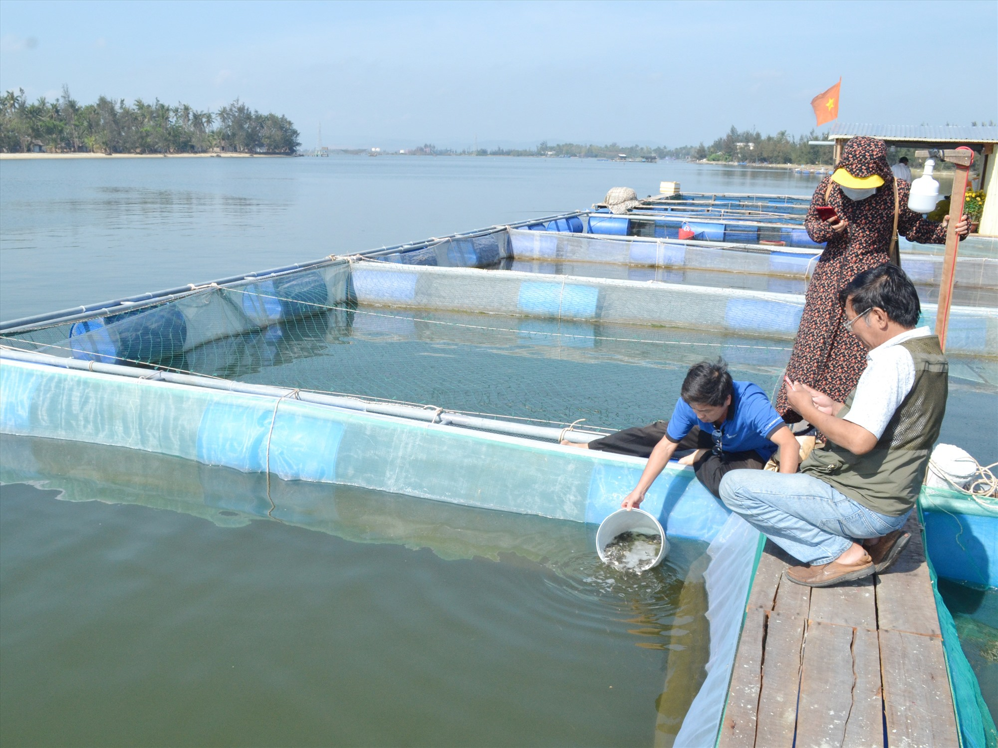 Trung tâm Khuyến nông tỉnh hỗ trợ giống cá chim vây vàng giúp hộ ông Trần Văn Đức nuôi cá ở ven biển An Hòa. Ảnh: VIỆT NGUYỄN