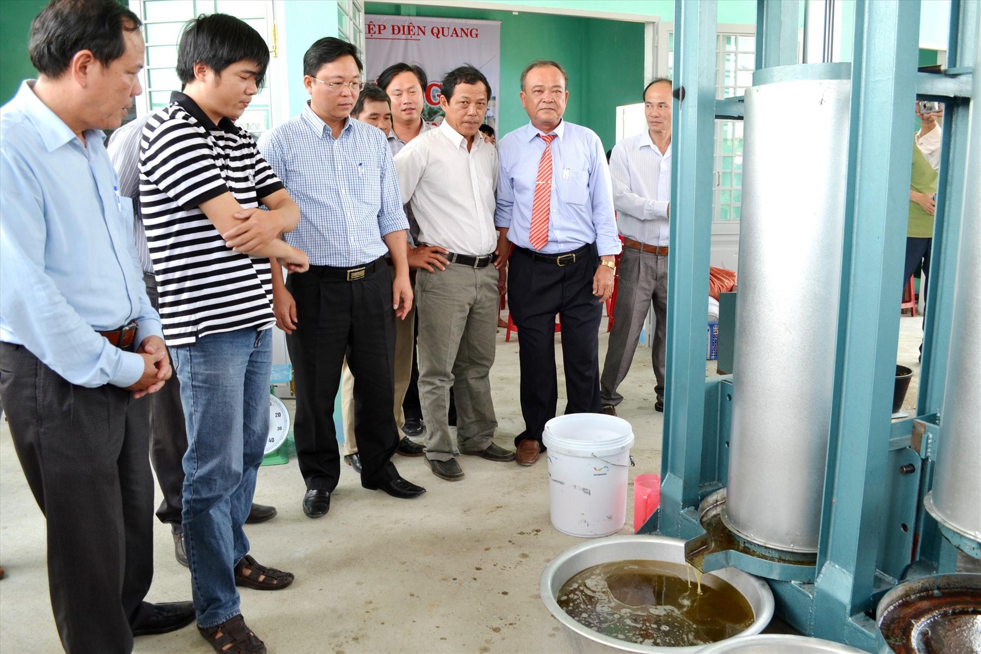 """HTX Nông nghiệp Điện Quang (Điện Bàn) thu mua đậu phụng của nông dân để chế biến """"dầu phụng Đất Phụng"""", sản phẩm được công nhận đạt chuẩn OCOP 3 sao. Ảnh: CT"""