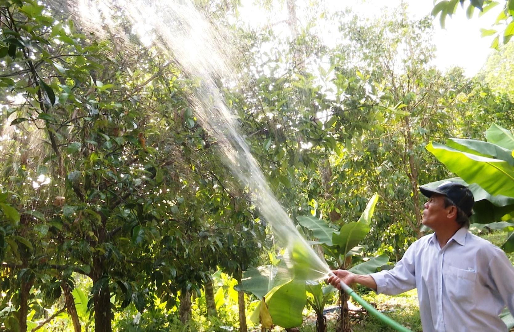 Xã Tiên Mỹ có nhiều vườn cây ăn quả cho thu nhập cao. Ảnh: NGUYỄN HƯNG