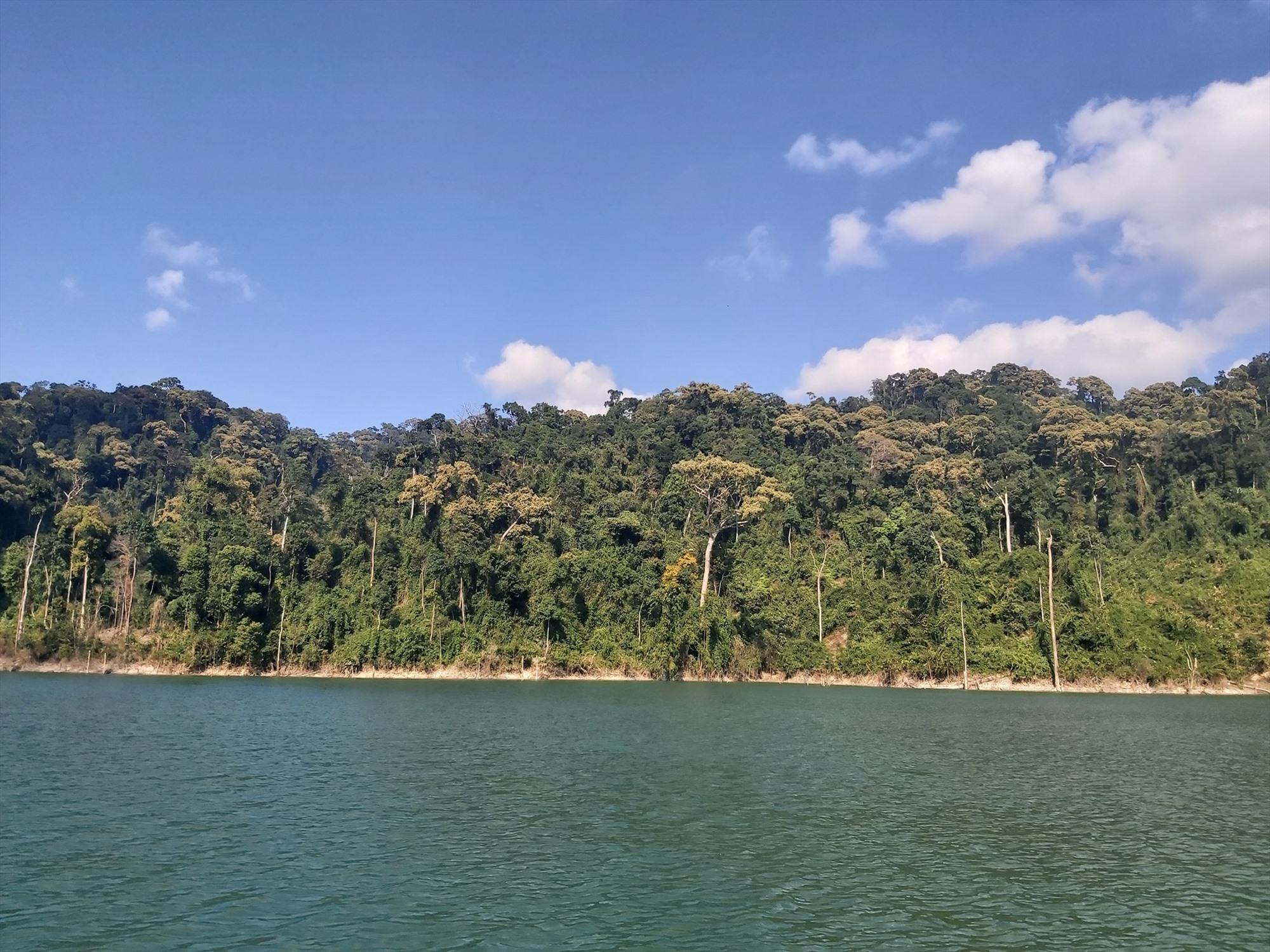 Lâm phận vườn quốc gia Sông Thanh. Ảnh: THANH NHÀN