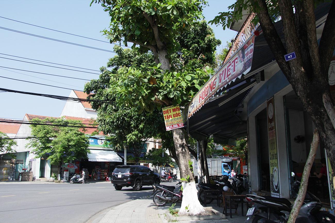 """Phướn """"Diệt mối tận gốc"""" bị dán hầu hết trên những thân cây ven vỉa hè ở các tuyến đường phố TP.Tam Kỳ."""