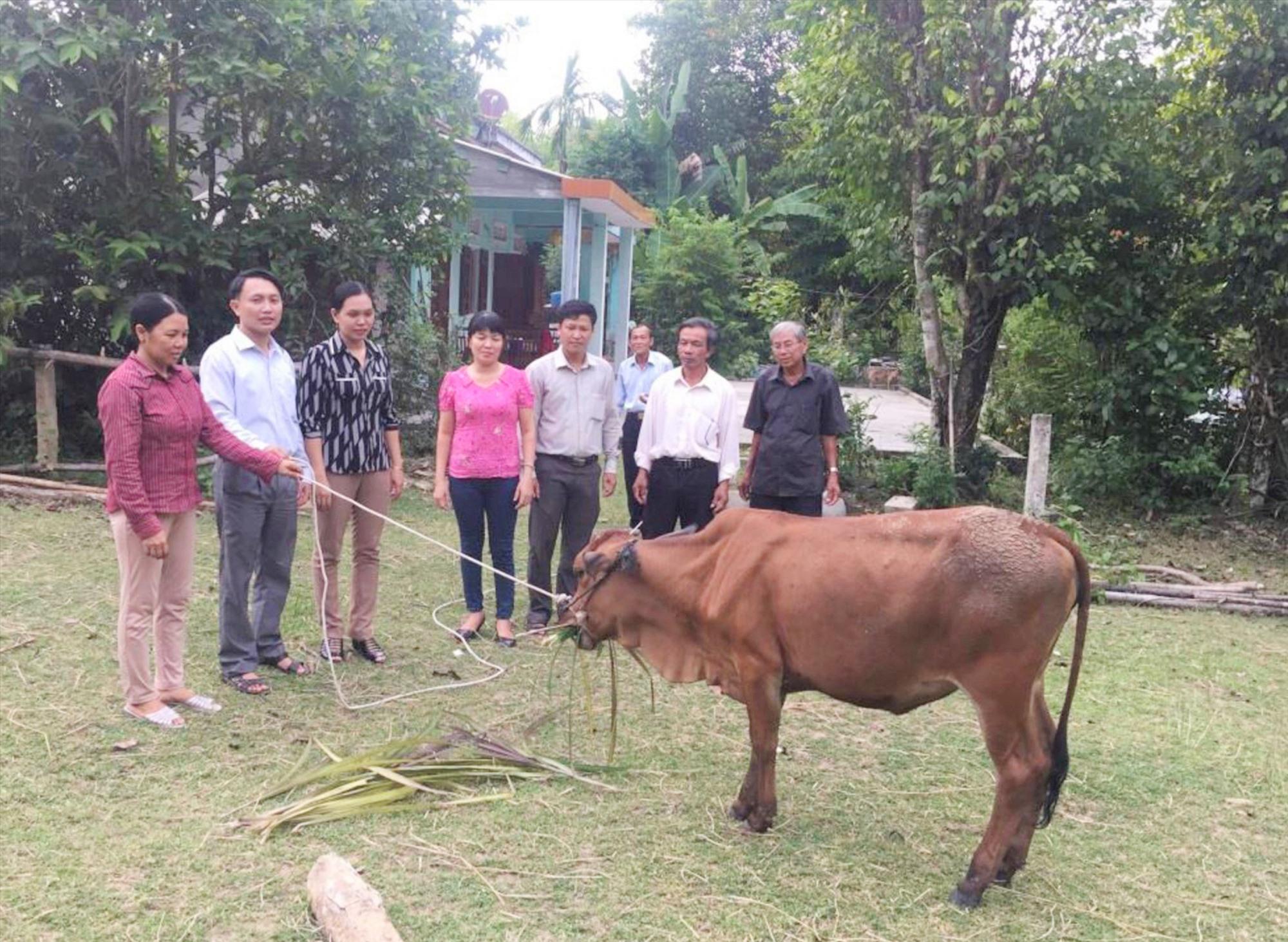 Hội LHPN xã Tam Thái phối hợp tặng bò giống cho hội viên phụ nữ nghèo. Ảnh: CTV