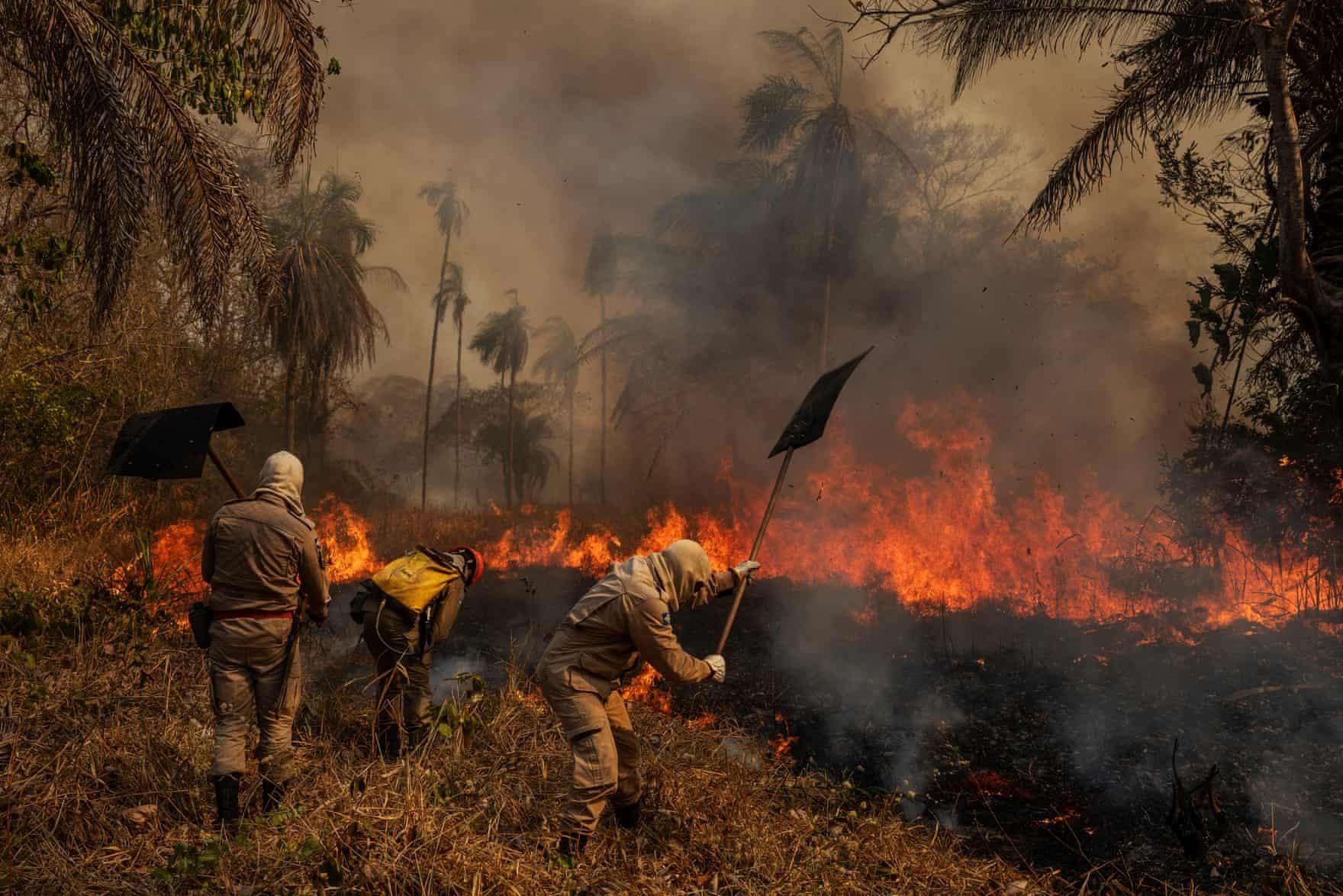 Lính cứu hỏa dập lửa tại trang trại Sao Francisco de Perigara, nơi sinh sống của một trong những quần thể vẹt đuôi dài Hyacinth (Anodorhynchus hyacinthinus) lớn nhất ở Brazil ngày 14/8/2020. Khoảng 92% diện tích trang trại, phần lớn được bảo tồn, đã bị ngọn lửa thiêu rụi.