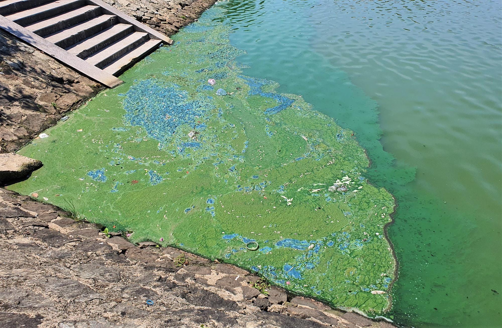 Lớp ván có màu xanh dưới hồ điều hòa Nguyễn Du. Ảnh: HOÀI AN