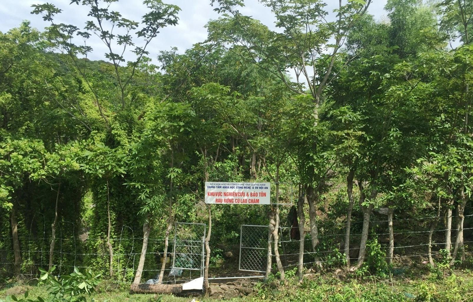 Khu vực nghiên cứu, bảo tồn các loài rau rừng Cù Lao Chàm. Ảnh: HOÀNG LIÊN