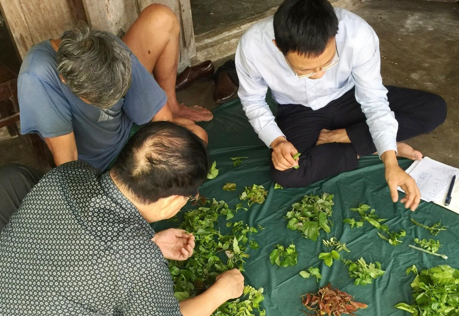 Các nhà khoa học nghiên cứu về các loại rau rừng Cù Lao Chàm. Ảnh: HOÀNG LIÊN