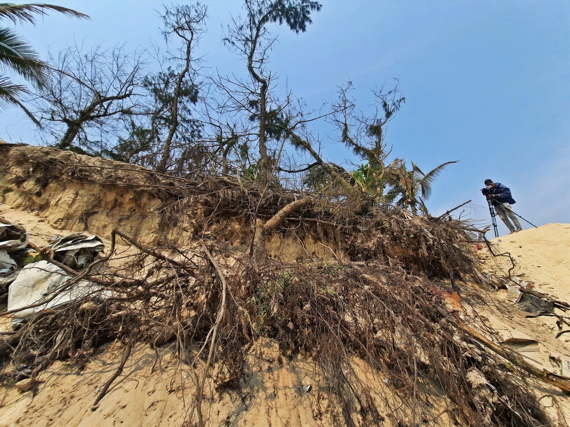 Rừng dương liễu chắn sóng, gió ven bờ cũng bị đánh tan tành.
