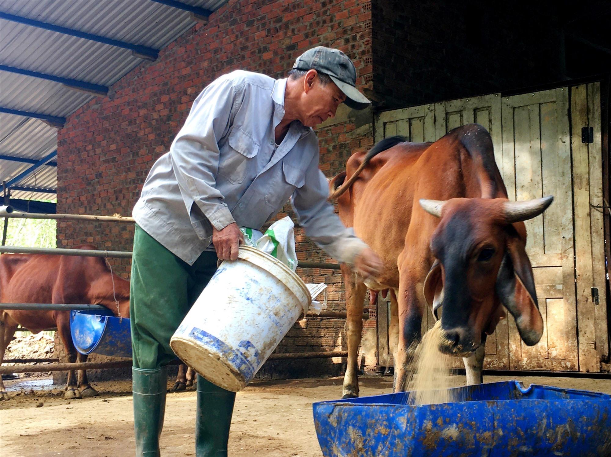 Người chăn nuôi cần thường xuyên vệ sinh chuồng trại và phun hóa chất diệt côn trùng để hạn chế sự lây lan của vi rút gây bệnh viêm da nổi cục. Ảnh: N.S