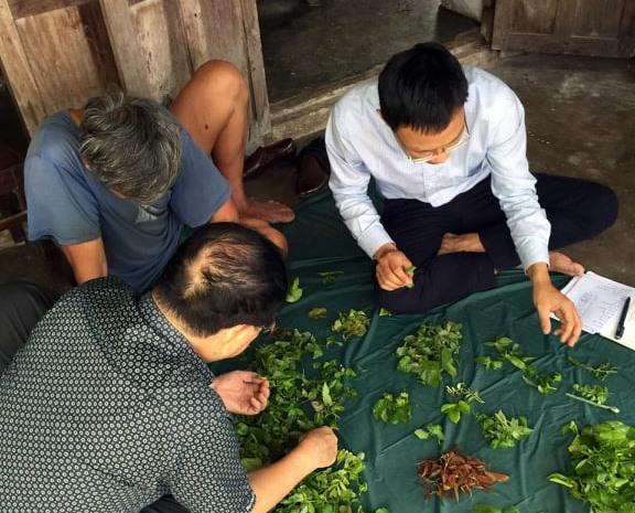 Nghiên cứu một số loại rau rừng, lá uống hỗ trợ tiêu hóa, tim mạch, an thần tại Cù Lao Chàm. Ảnh: CTV