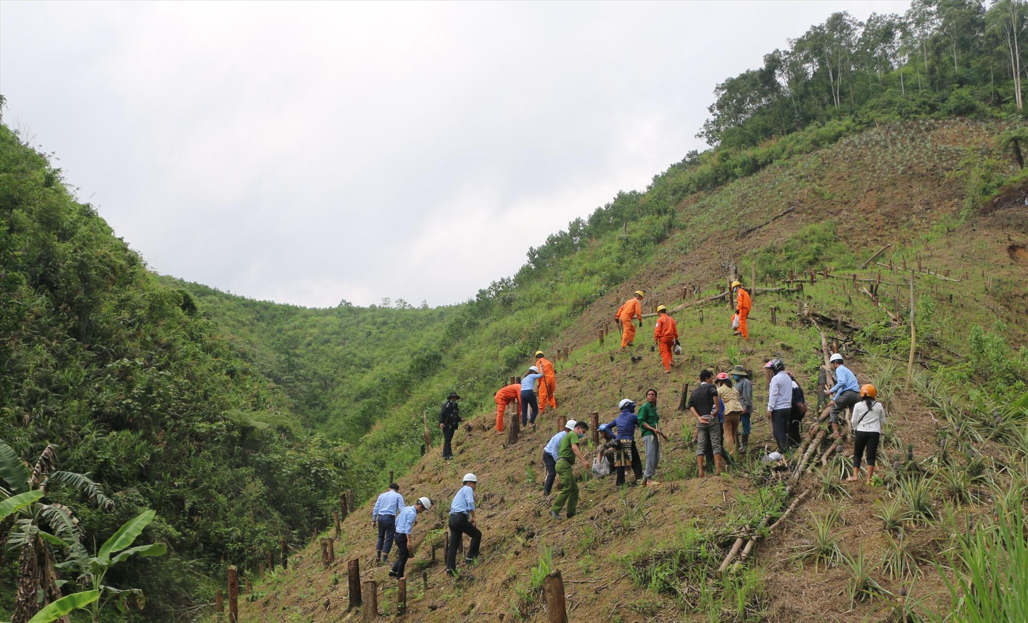 Trông 600 cây quế giống (quế Trà My) tại thôn A Réc