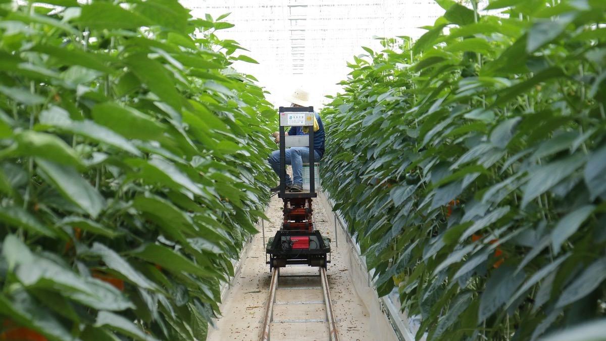 Rô bốt tham gia giám sát cây trồng. Ảnh: id.techinasia