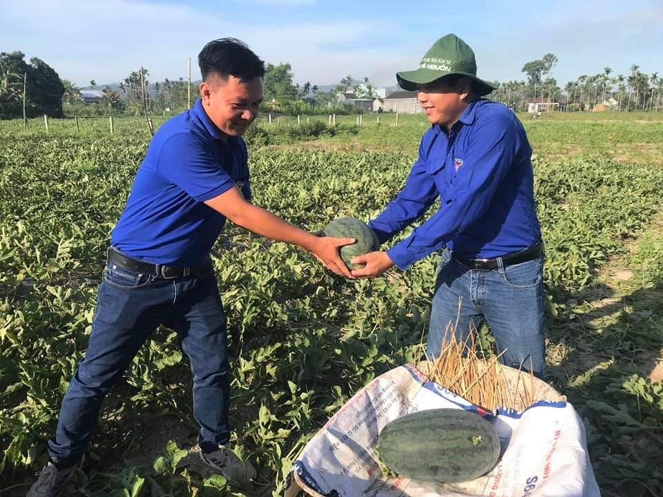 Thanh niên xã Tam Xuân 2 hỗ trợ người dân thu hoạch và tiêu thụ dưa hấu. Ảnh: Đoàn xã Tam Xuân 2.