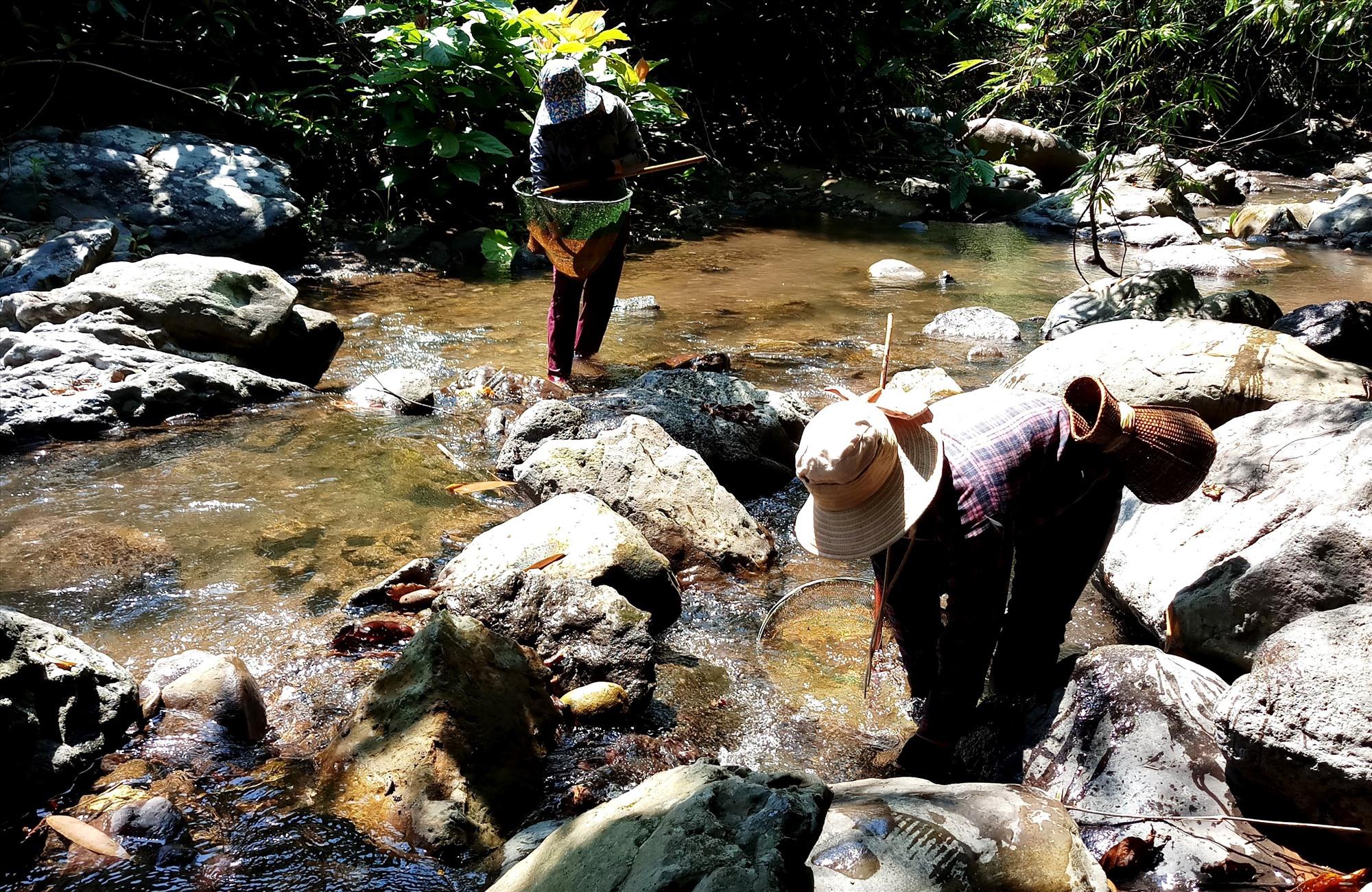 Để giữ môi trường tự nhiên, người vùng cao thường dùng vợt để bắt cá. Ảnh: Đ.N