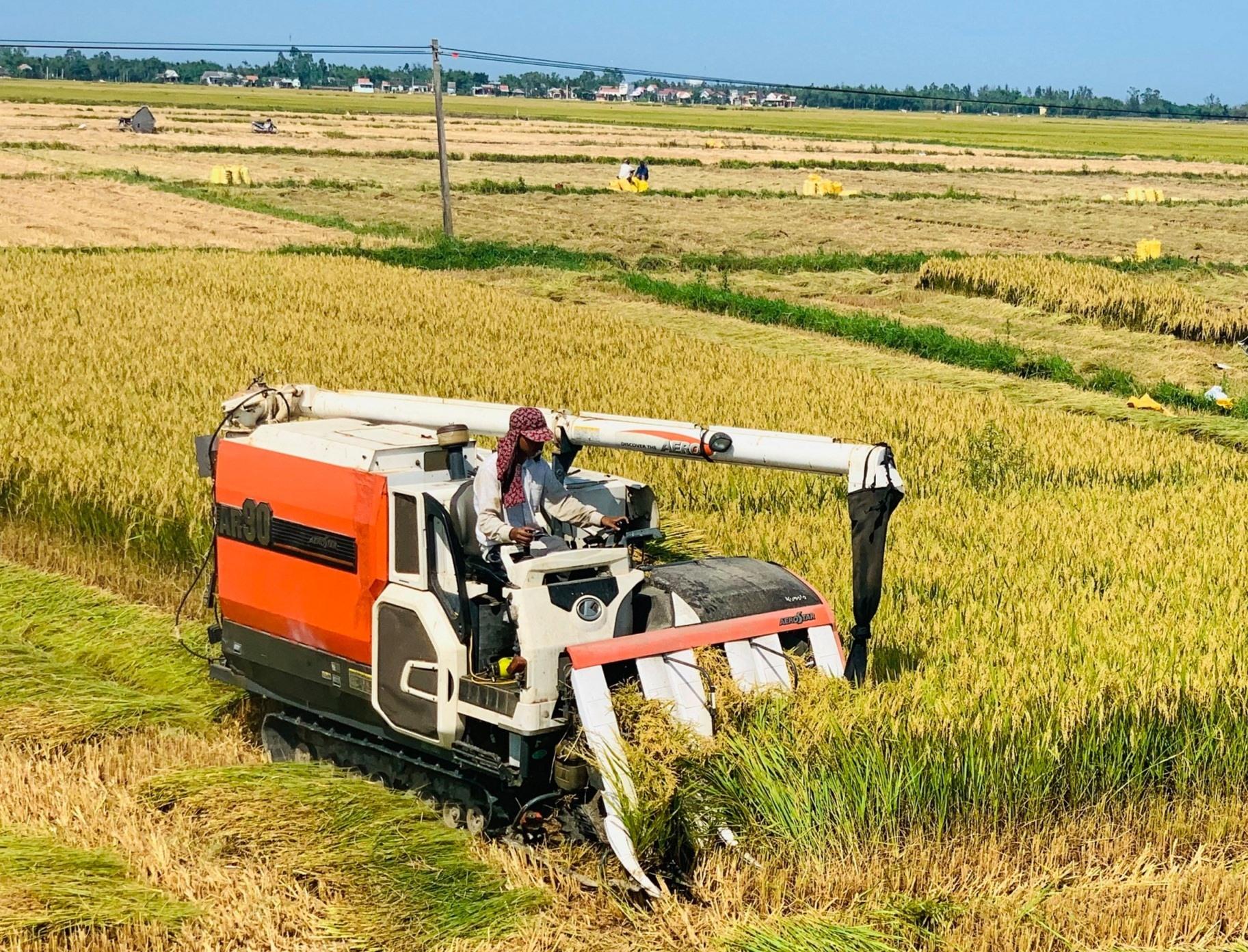 Sản xuất theo chuỗi để phát triển nông nghiệp bền vững. Ảnh: VĂN SỰ