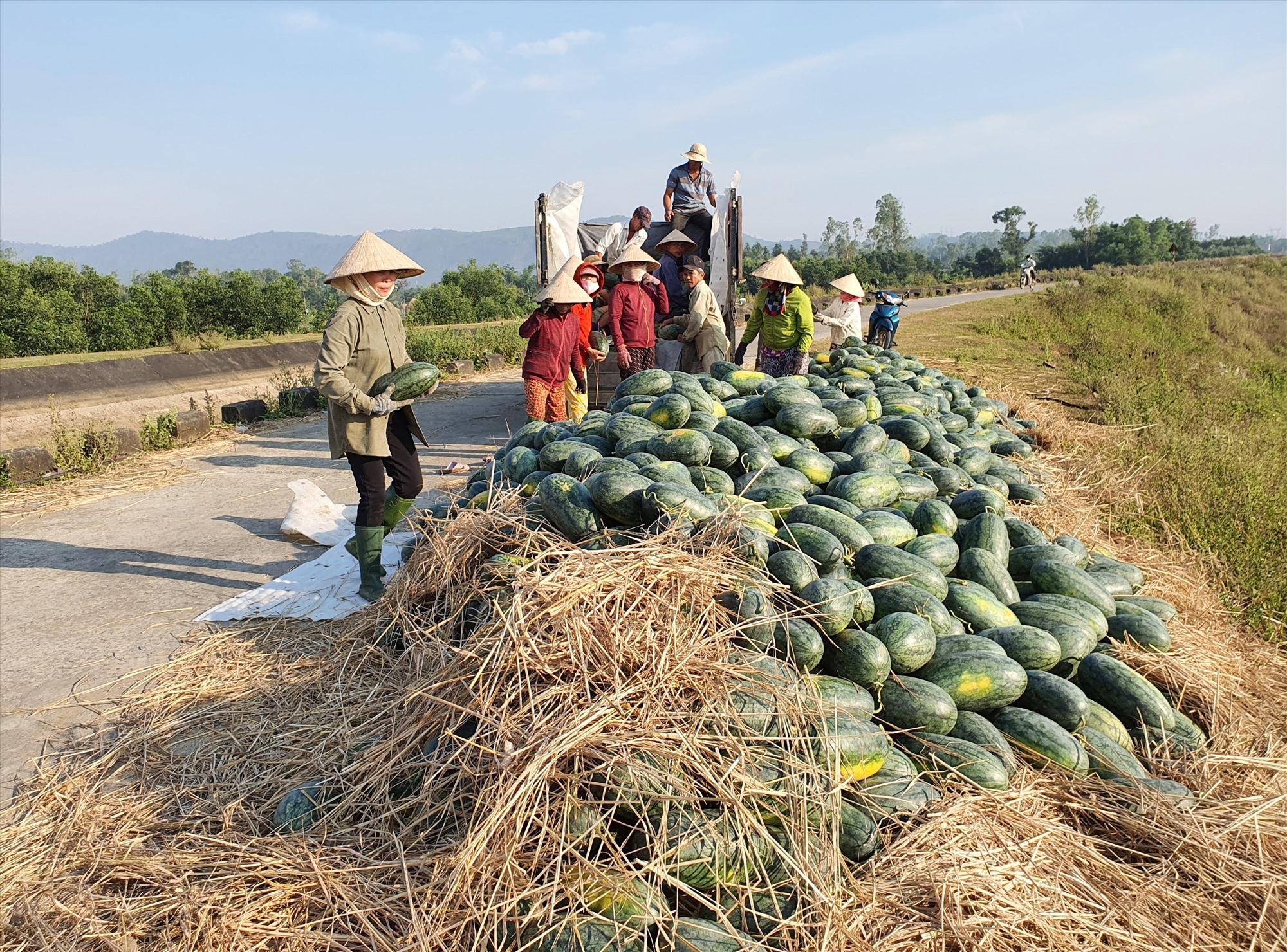 Quảng Nam cần áp dụng đồng bộ các giải pháp để ổn định đầu ra nông sản. Ảnh: V.S