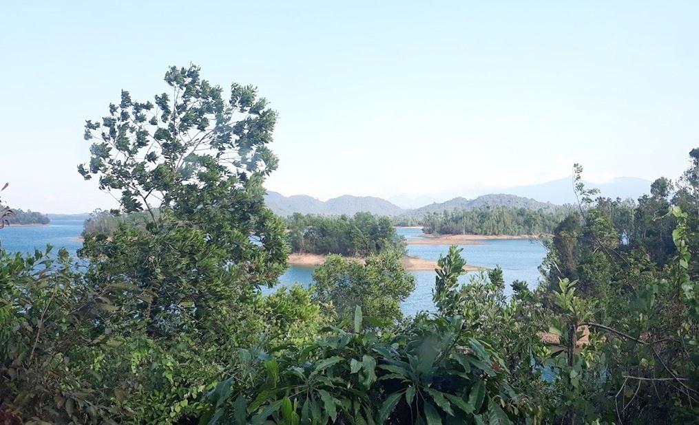 Một góc rừng phòng hộ Phú Ninh (ảnh minh họa). Ảnh: C.N
