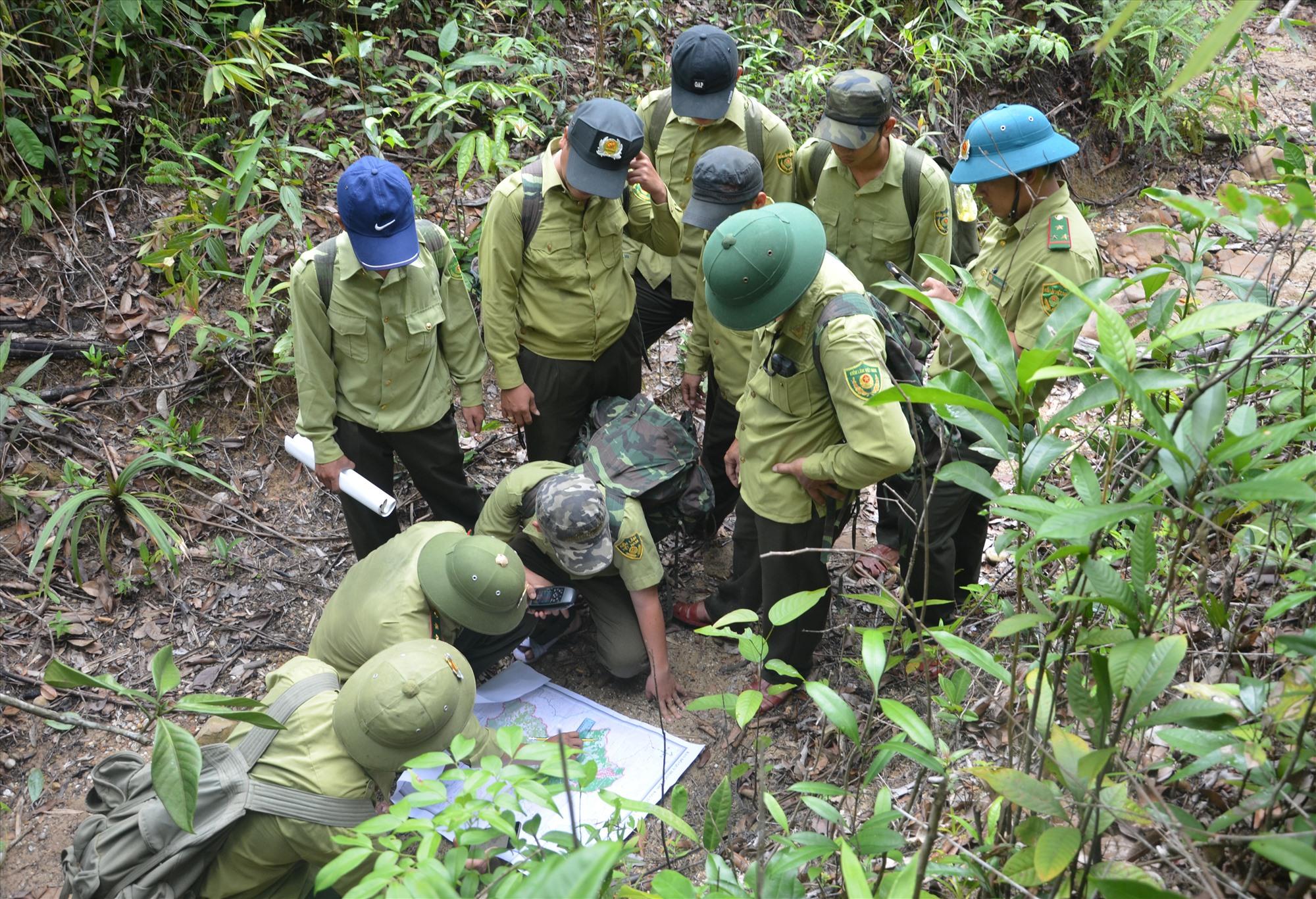 Một chuyến tuần tra rừng trong Khu bảo tồn loại và sinh cảnh voi Quảng Nam, tại xã Quế Lâm (Nông Sơn). Đây là vùng nằm trong kế hoạch hành động REDD+. Ảnh: H.P