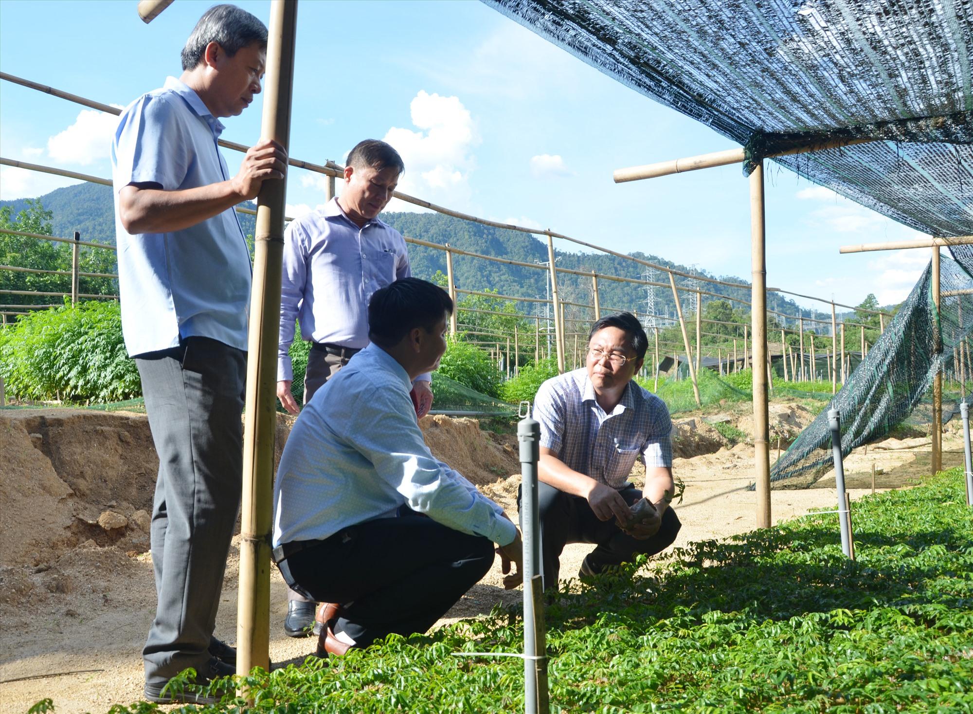 Chủ tịch UBND tỉnh Lê Trí Thanh và Phó Chủ tịch UBND tỉnh Hồ Quang Bửu kiểm tra vườn ươm cây giống tại Vườn quốc gia Sông Thanh.Ảnh: H.P