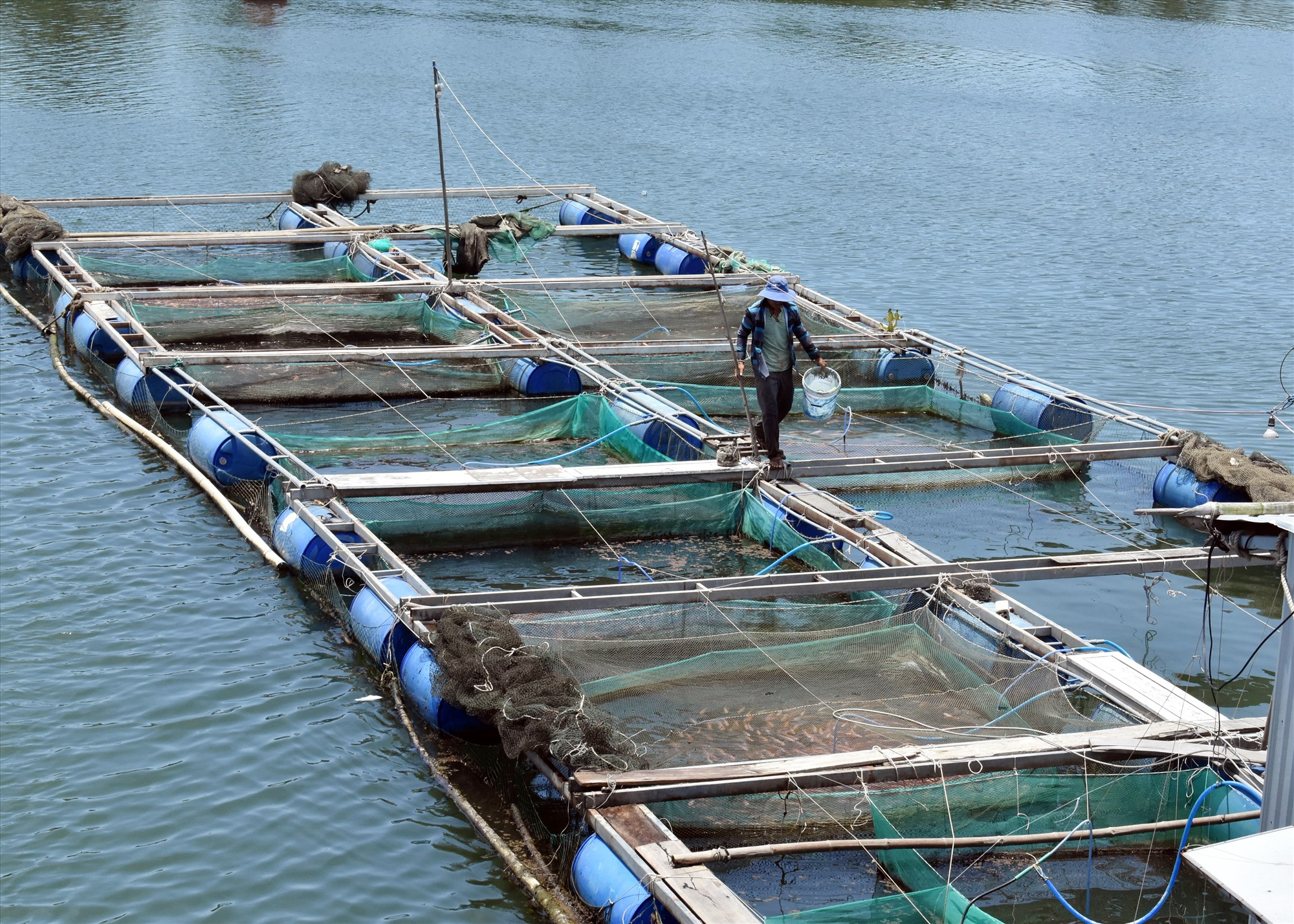 Giá bột cám cá ăn tăng khiến người nông dân gặp khó. Ảnh: V.LỘC
