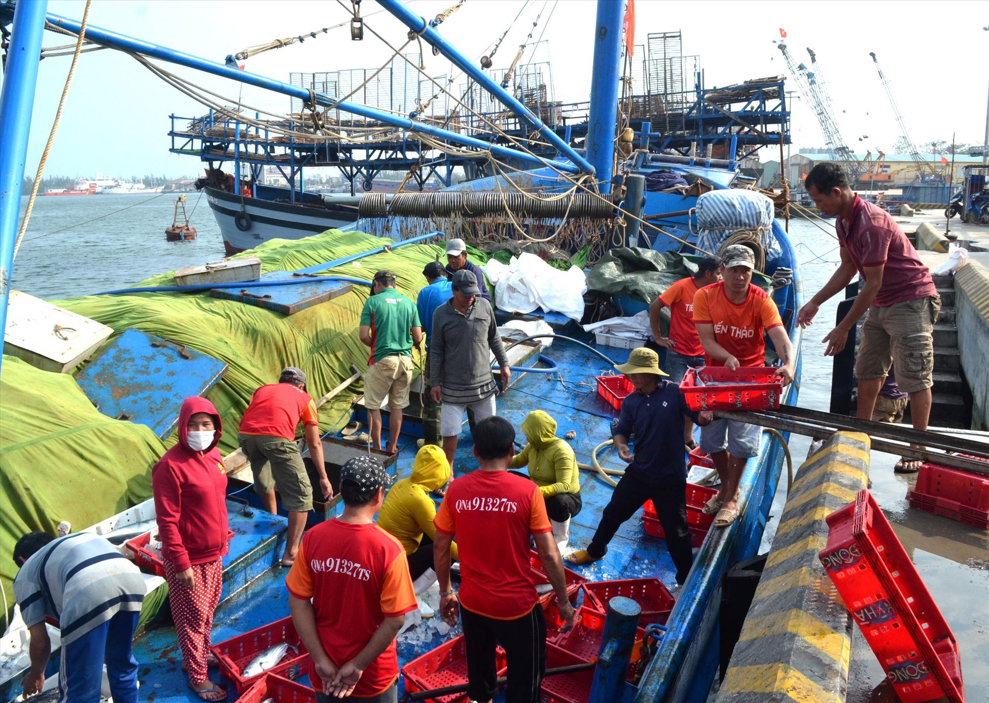 Ngư dân Quảng Nam gặp khó vì mất mùa mất giá hải sản. Ảnh: V.NGUYỄN