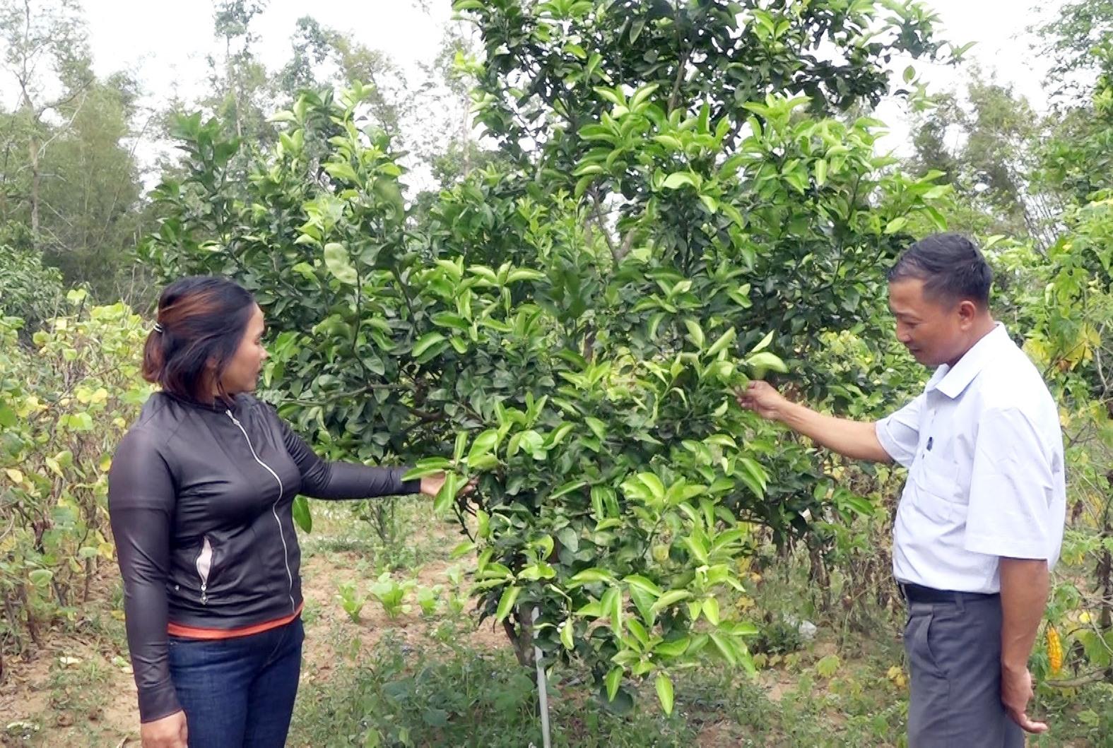 Vườn cây ăn quả của chị Phan Thị Chín đang phát triển tốt, hứa hẹn sẽ cho hiệu quả kinh tế cao. Ảnh: M.T