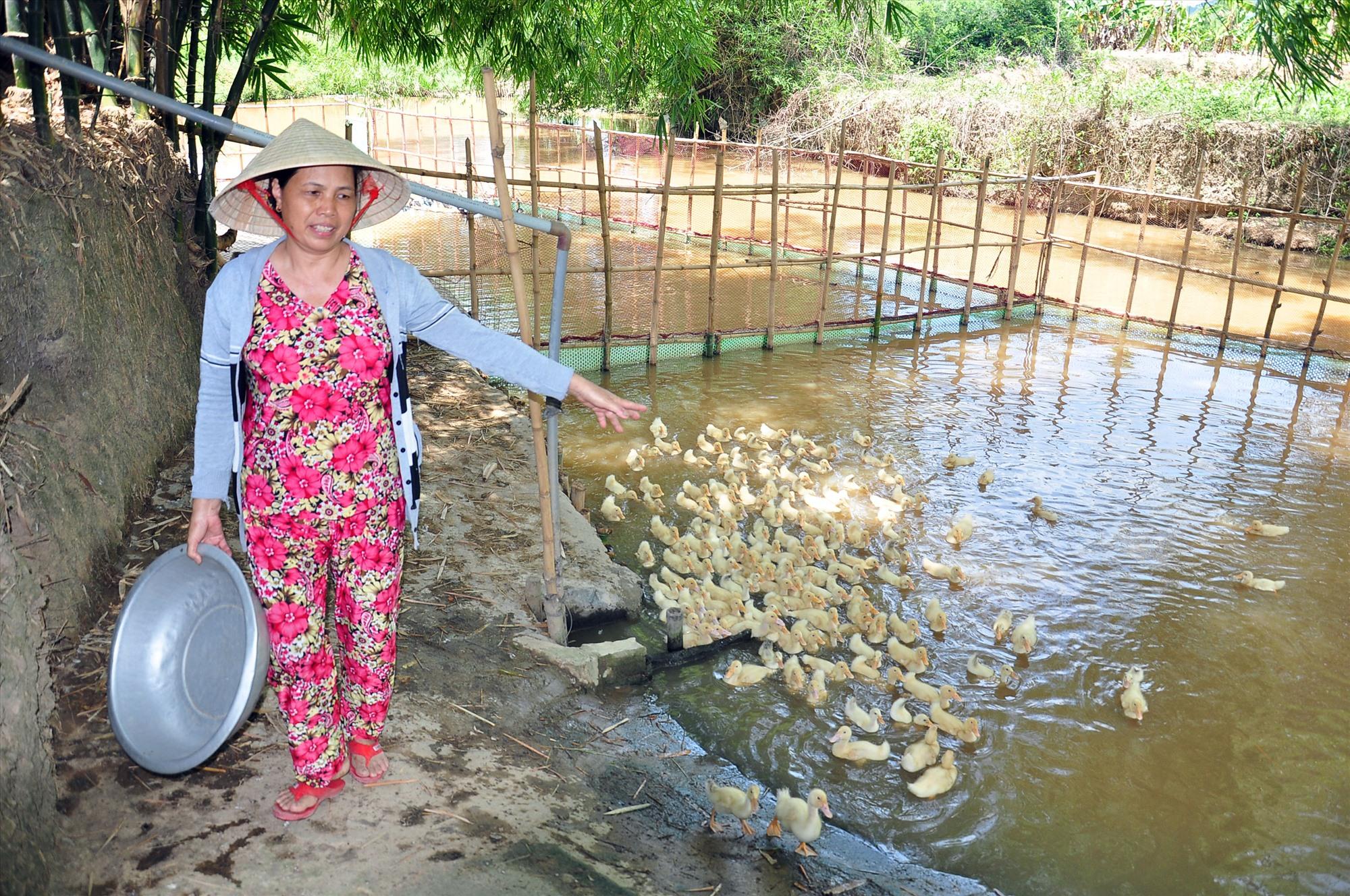 Hộ bà Nguyễn Thị Nhựt (thôn Trung Nam, xã Quế Trung) đã thoát nghèo nhờ mạnh dạn tiếp cận vốn vay ưu đãi để phát triển kinh tế gia trại. Ảnh: S.A