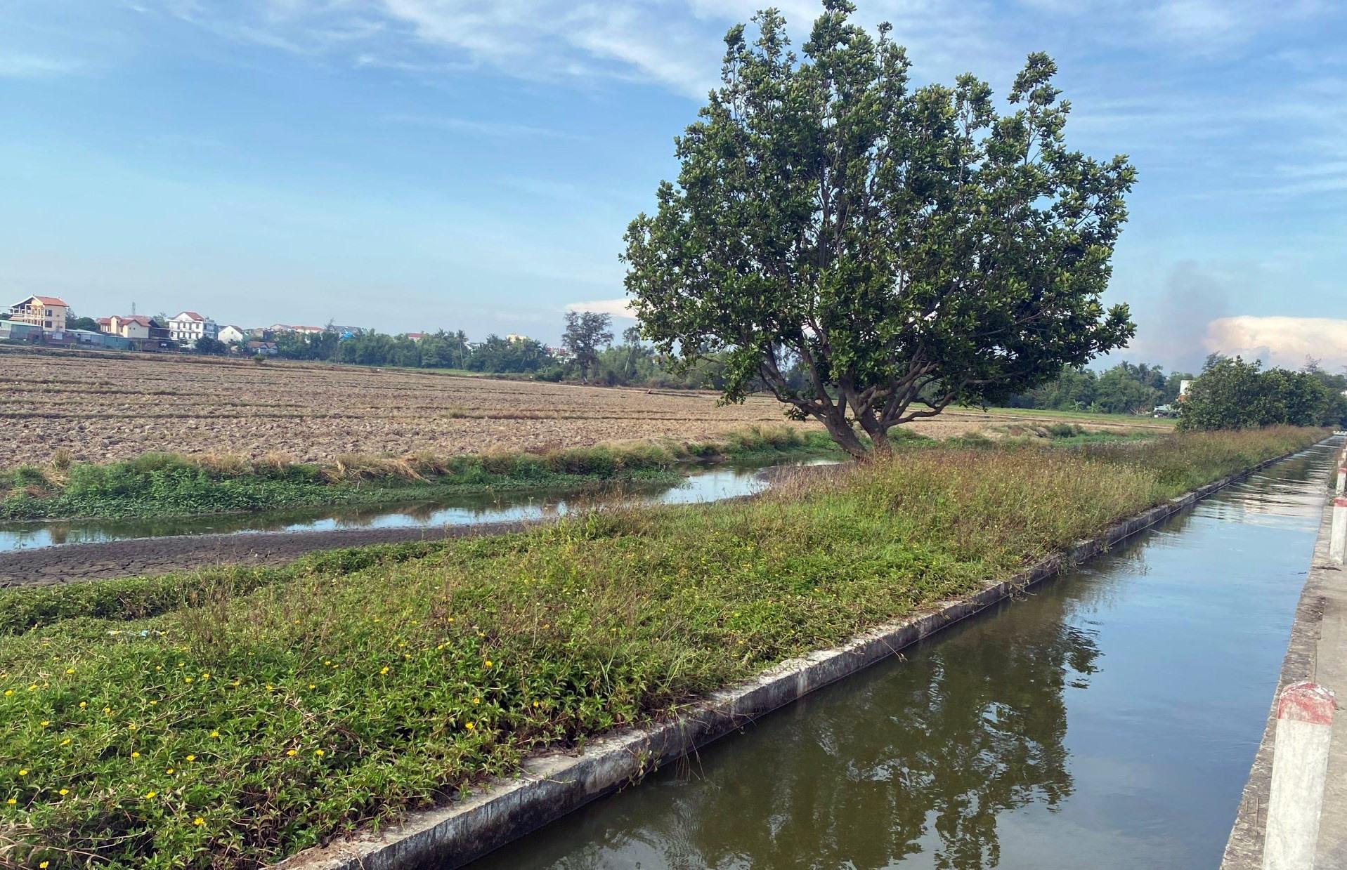 Ngành nông nghiệp Hội An khắc phục kịp thời nguồn nước tưới nhiễm mặn để đảm bảo sản xuất vụ hè thu. Ảnh: MỸ LỆ