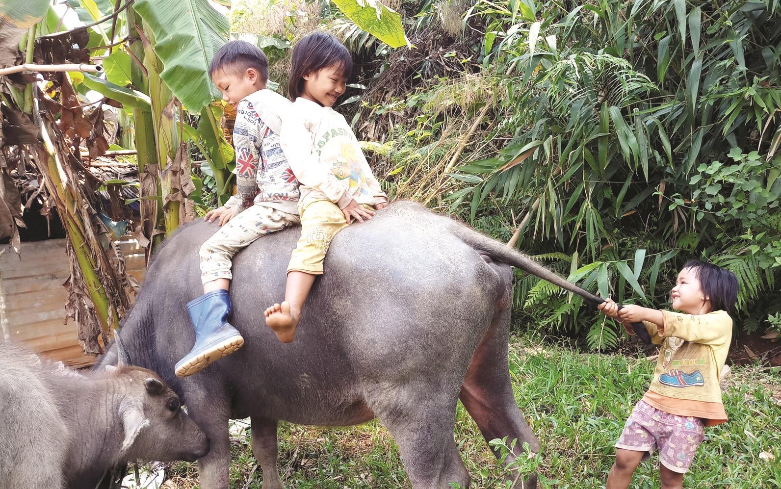 Niềm vui ngày hè của những đứa trẻ ở xã Phước Lộc (Phước Sơn).
