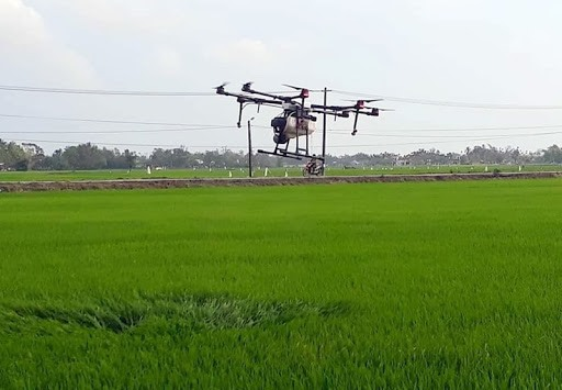 A pesticide praying drone on the fields in Tam Xuan 2