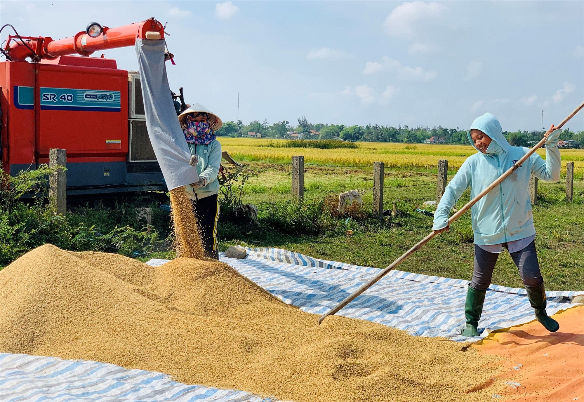 Tại một số vùng trọng điểm sản xuất lúa của Duy Xuyên, năng suất đạt gần 80 tạ/ha.    Ảnh: T.P