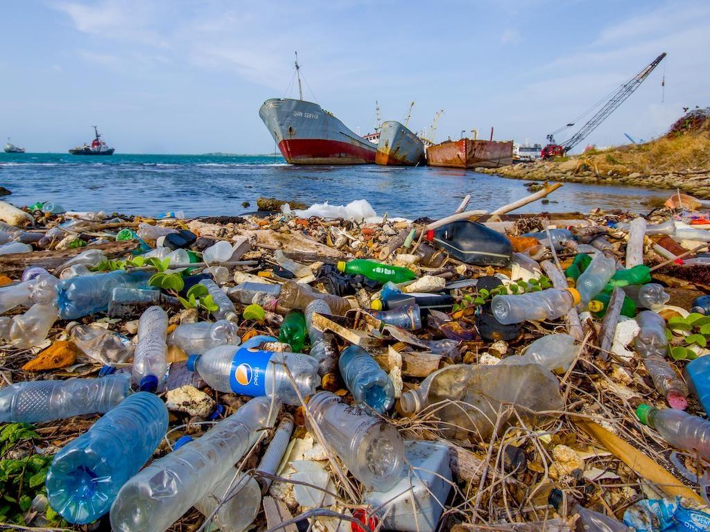 Ô nhiễm nhựa là nguyên nhân gây ra thiệt hại cho gần 1 triệu con chim và 10.000 động vật biển hàng năm. Ảnh: Shutterstock