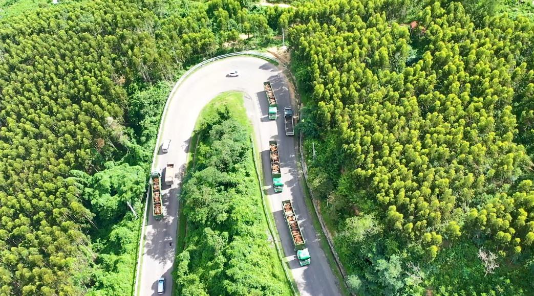 Xe vận chuyển gia súc của THILOGI chở bò cho công ty Chăn nuôi bò Trung Nguyên.