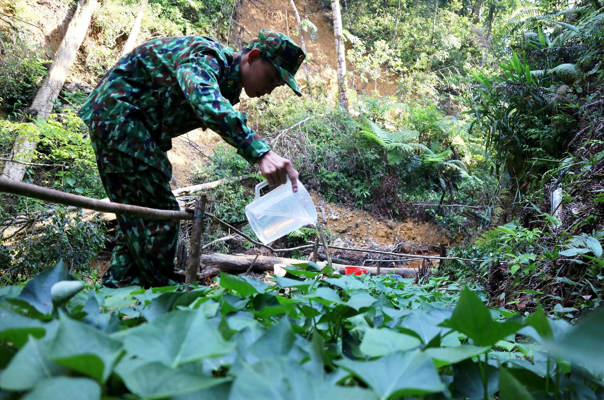 Binh nhất Trịnh Thanh Đến chăm sóc rau sau chuyến tuần tra và cho biết luôn tự hào với tháng ngày trong quân ngũ. Ảnh: ALĂNG NGƯỚC
