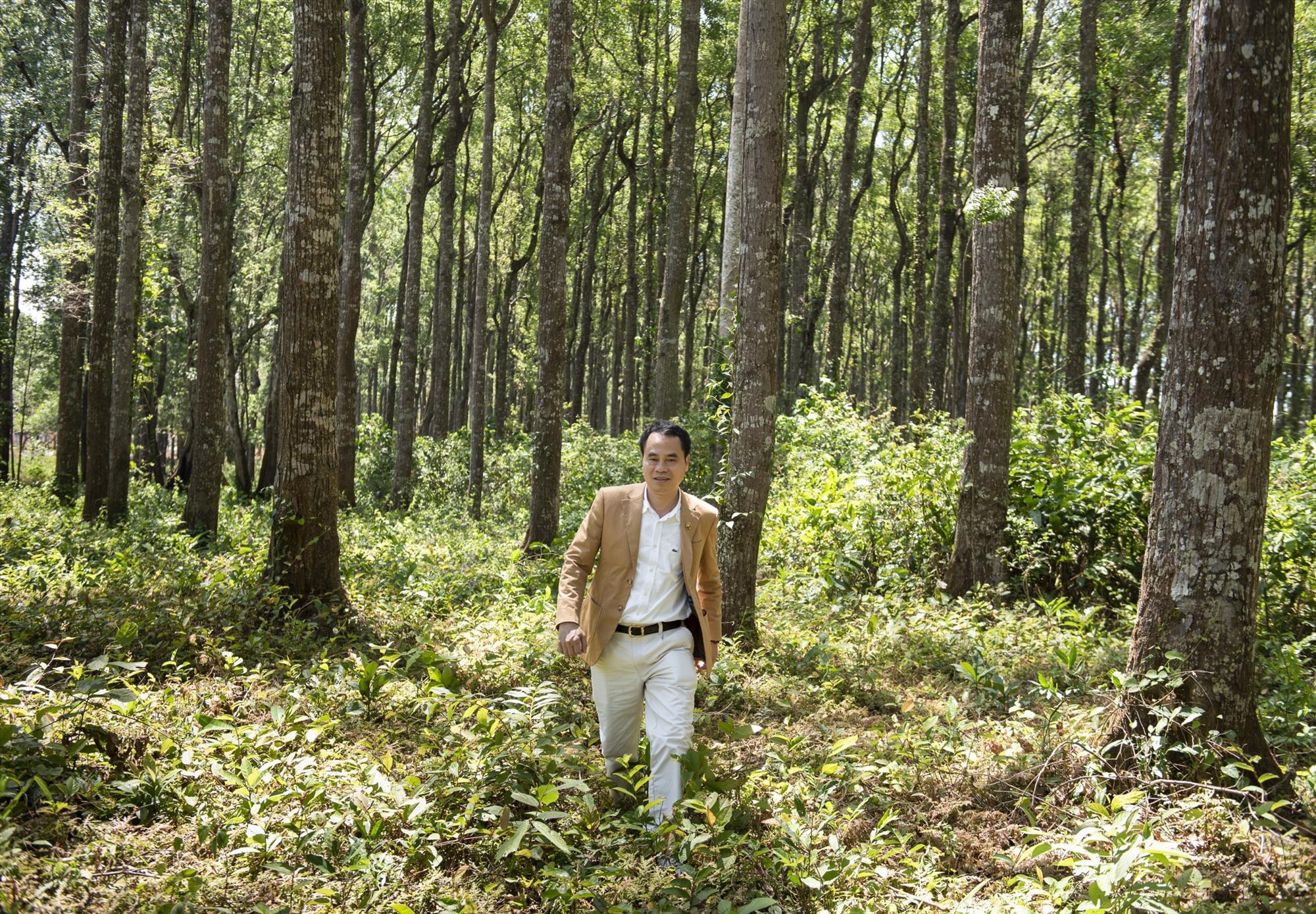 Nguyễn Văn Tưởng trong cánh rừng dó bầu.