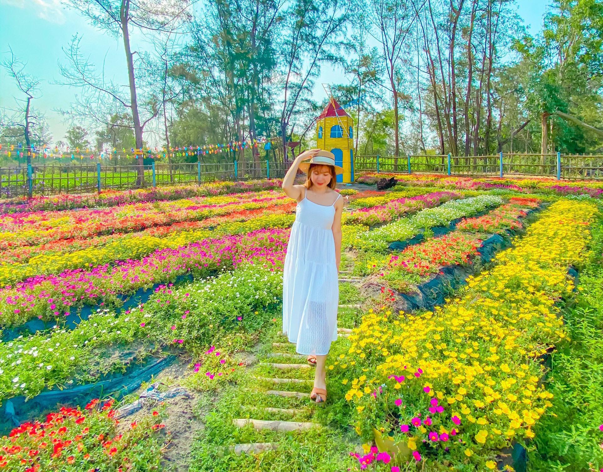 Vườn sam với hơn 20 màu sắc ở Travada Garden. Ảnh: Q.T