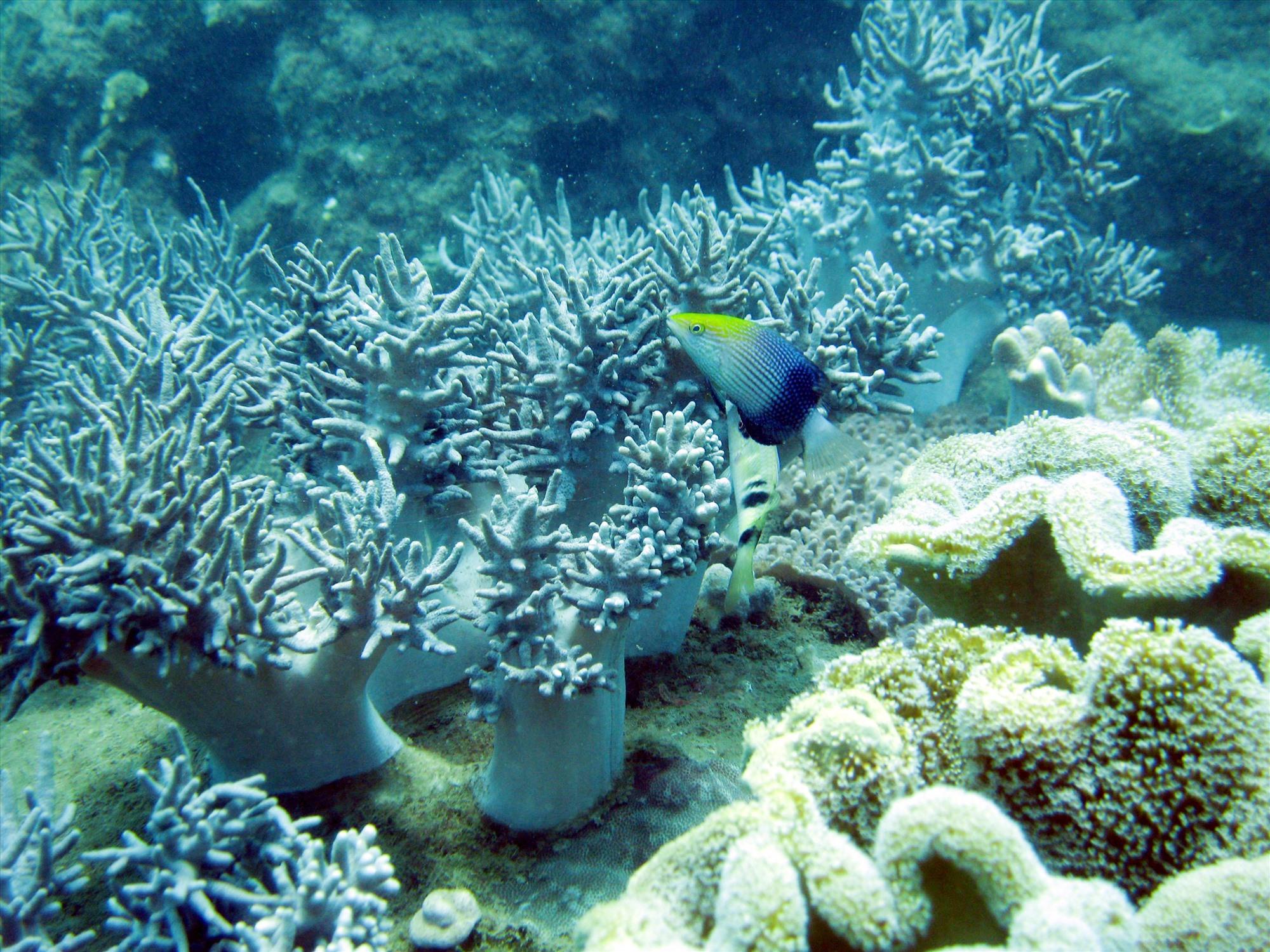 Vùng biển Quảng Nam rất đa dạng sinh học. Ảnh: VIỆT NGUYỄN