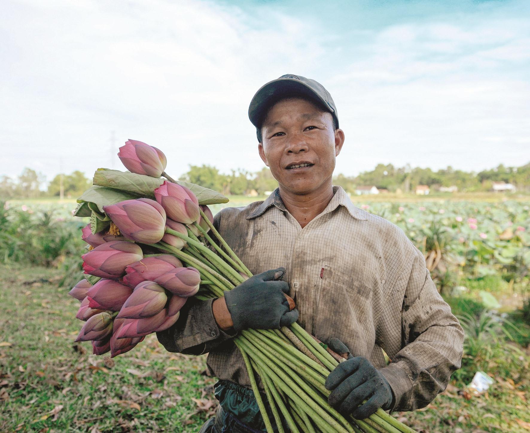 Sen đầu mùa có giá cao. Người dân thường thu hoạch sen 3 hôm 1 lần.