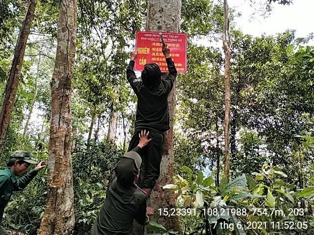 Bảo vệ rừng chuyên trách đóng biển báo cấm phá rừng tại thôn 2, xã Trà Giác (Bắc Trà My). Ảnh: V.B