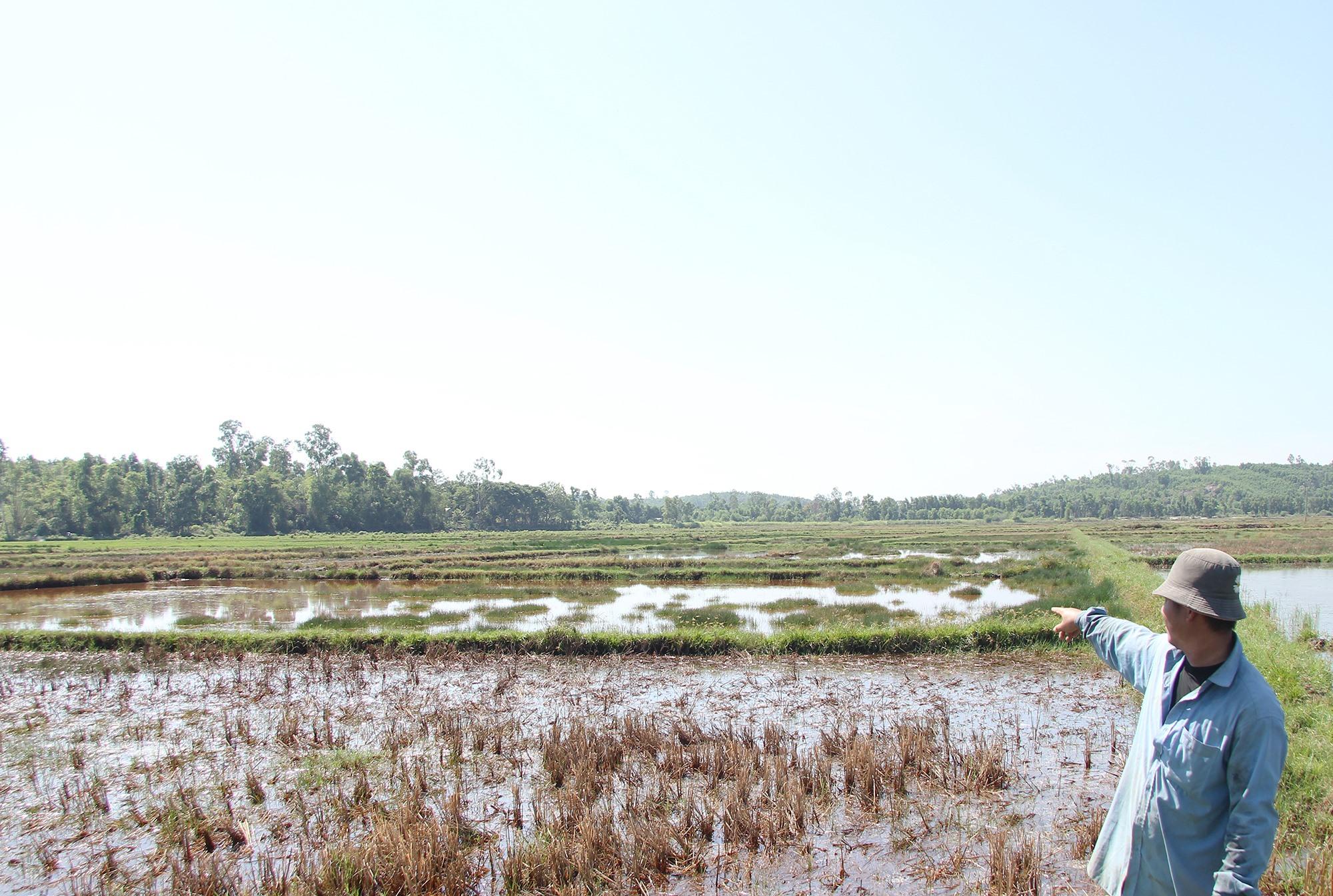 Phát triển cây dừa nước giúp chống xâm nhập mặn, bảo vệ đồng ruộng của người dân. Ảnh: H.Q