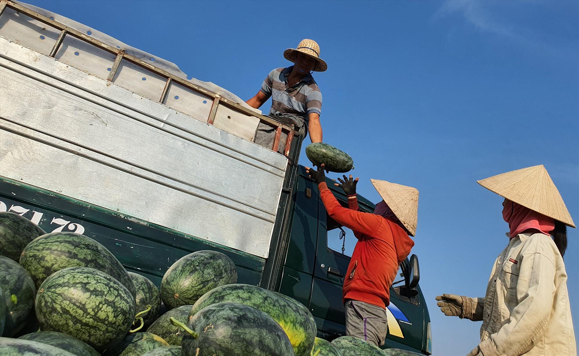 Cần tích cực thu hút doanh nghiệp vào đầu tư để liên kết với nông dân sản xuất nhằm tạo đầu ra ổn định cho nông sản. Ảnh: MAI LINH