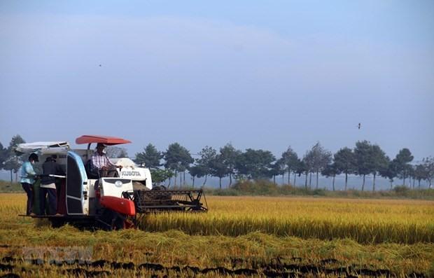 Harvesting rice (Photo: VNA)