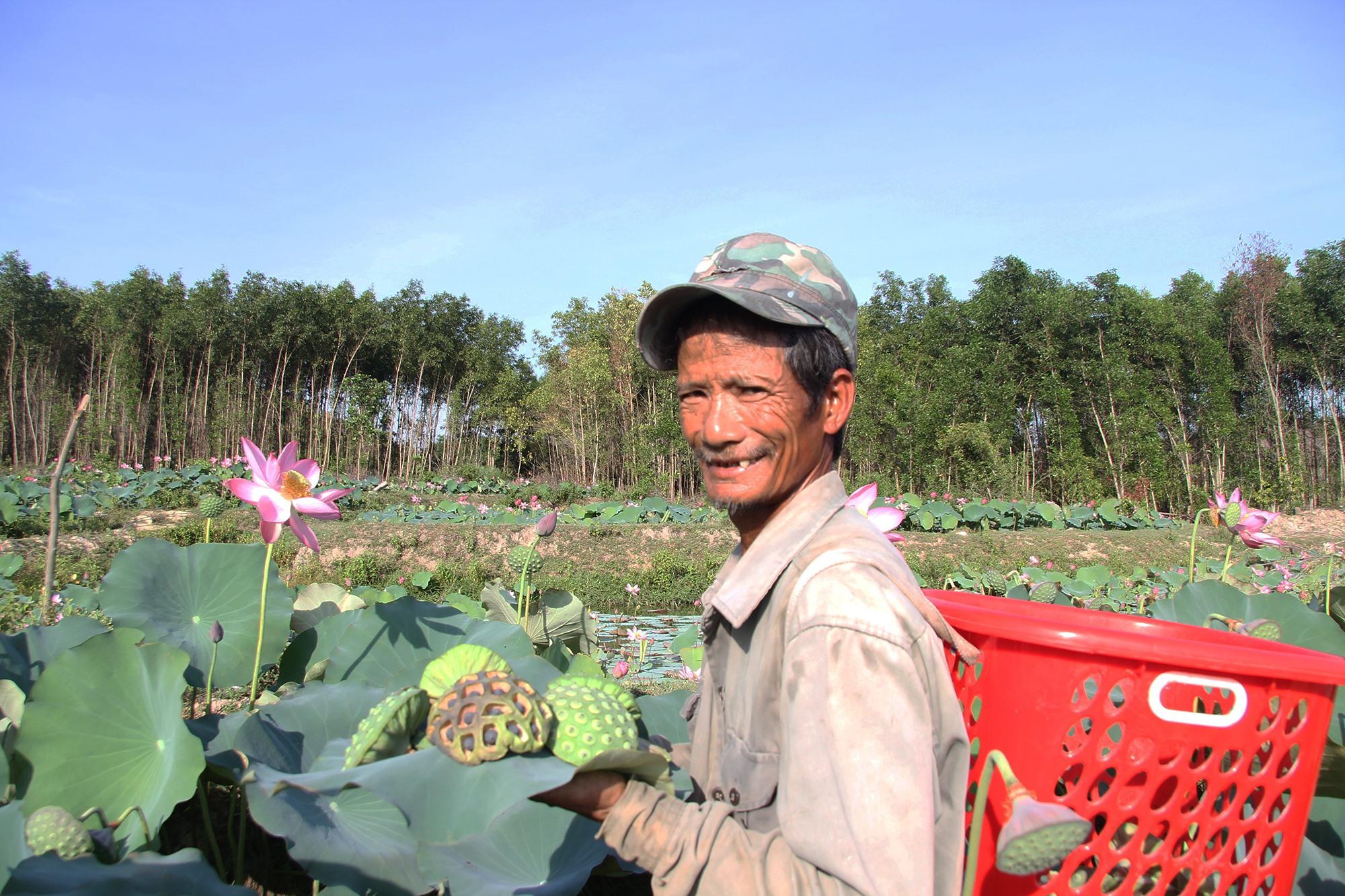 Người dân thôn Chánh Lộc, xã Duy Sơn phấn khởi khi được mùa sen. Ảnh: H.Q