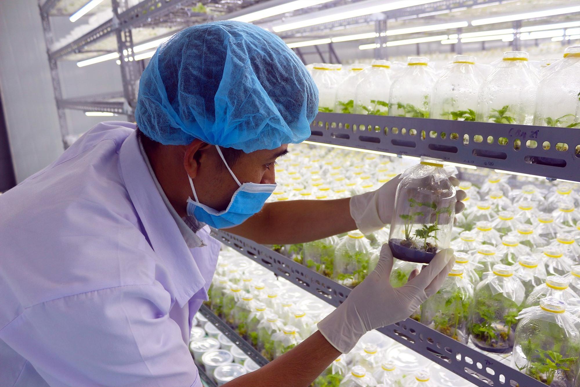 Quảng Nam cần có cơ chế hỗ trợ thiết thực để khuyến khích phát triển nông nghiệp công nghệ cao. Ảnh: NGUYỄN QUANG